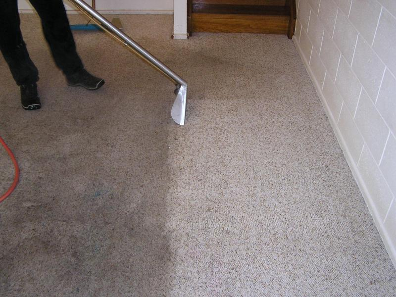 carpet+cleaners